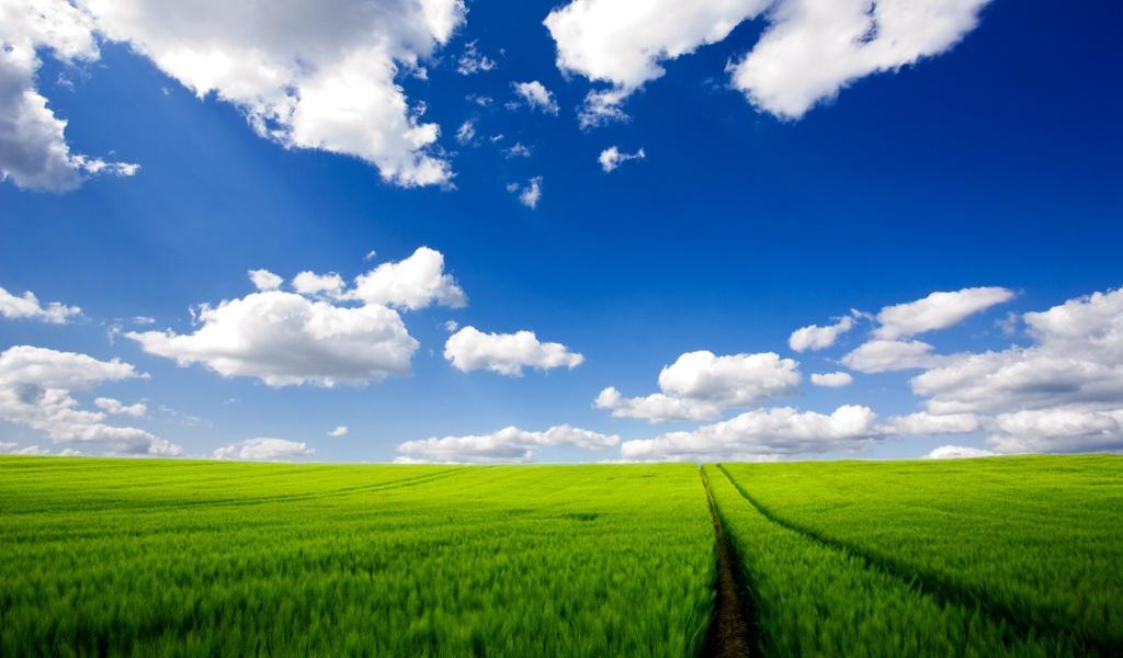 небо и трава 1024х600 обои