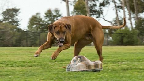 Go-Go Dog Pal