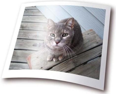 Фотобумага кот