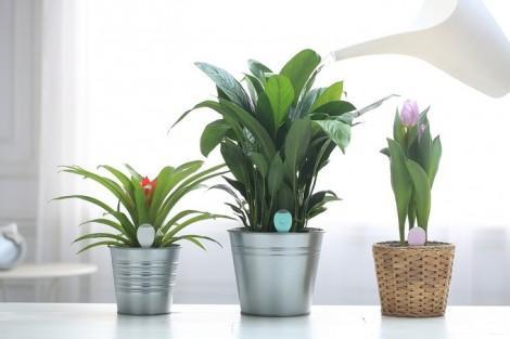 PlantSitter 3